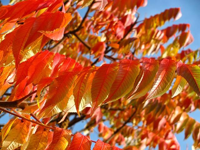oranžové listy