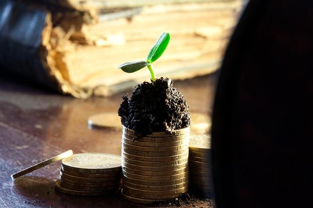 finanční růst, sazenice, mince